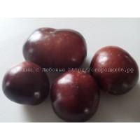 Голубика (Blueberry) США