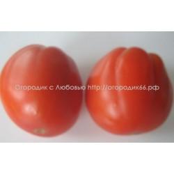 Груша красная (Red Pear) Италия