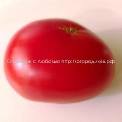 Красный гигант Андре Рехарта(Andrew Rahart Jumbo Red)