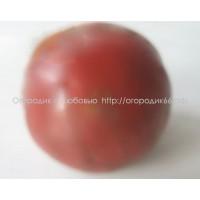 Красочная слива ( Bunte Pflaume )
