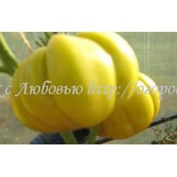 Лотарингская красавица желтая (Beauty Lottringa  Yellow) Франция