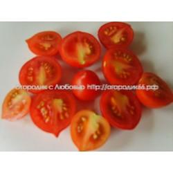 Сеньор помидор