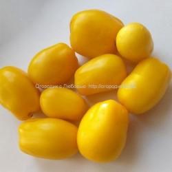 Сливка Бендрика жёлтая