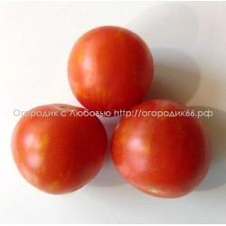 Эльберта персиковая (Elberta Peach) США