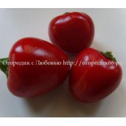 Óriás Cseresznye» ( Гигантская вишня )