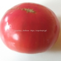 Нефиолетовая клубника (Not Purple Strawberry)