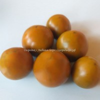 Терракотовый помидор (ТорбернаThorburn's Terra Cottа )