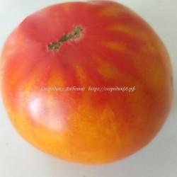 Дедушкингрейпфрут(PamplemoussedeGrandPere)