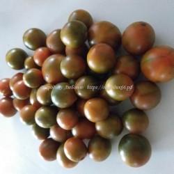 Злая маслина (Evil Olive)