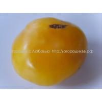 Большой Зак жёлтый (Big Zac Yellow)