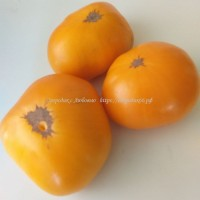 Оранжевый щербет (Amish Orange Sherbet )