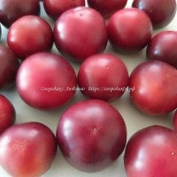 Рейнхарда фиолетовый сахар ( Reinhards Purple Sugar, Германия )