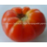 Брендвайн красный (Brandywine Red)