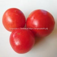 Томат Krumpiras (Croatian Early tomato super)