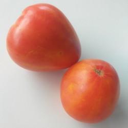 Томат Сердце абрикосовой зебры (Heart of Zebre Apricot)